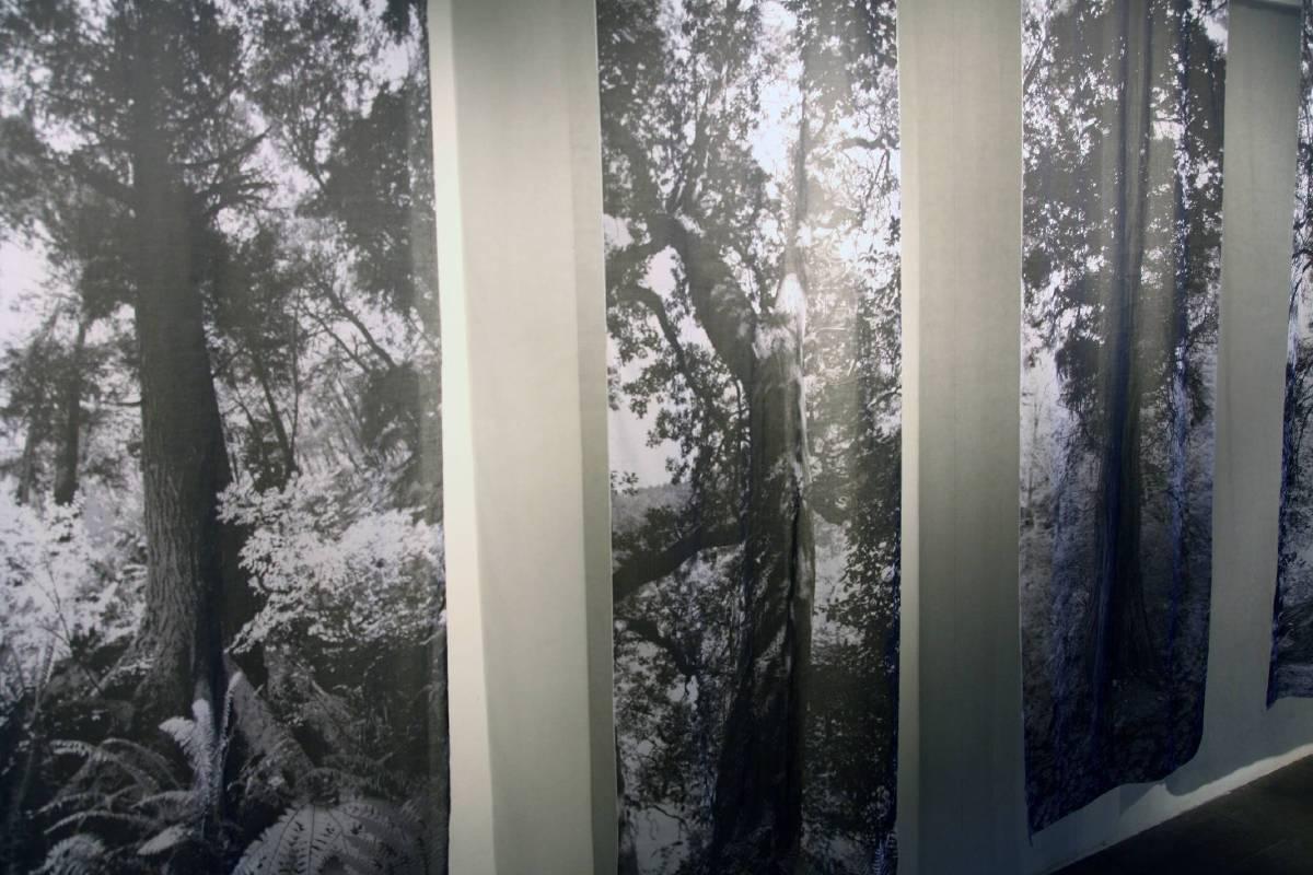 攝影作品:西北太平洋森林