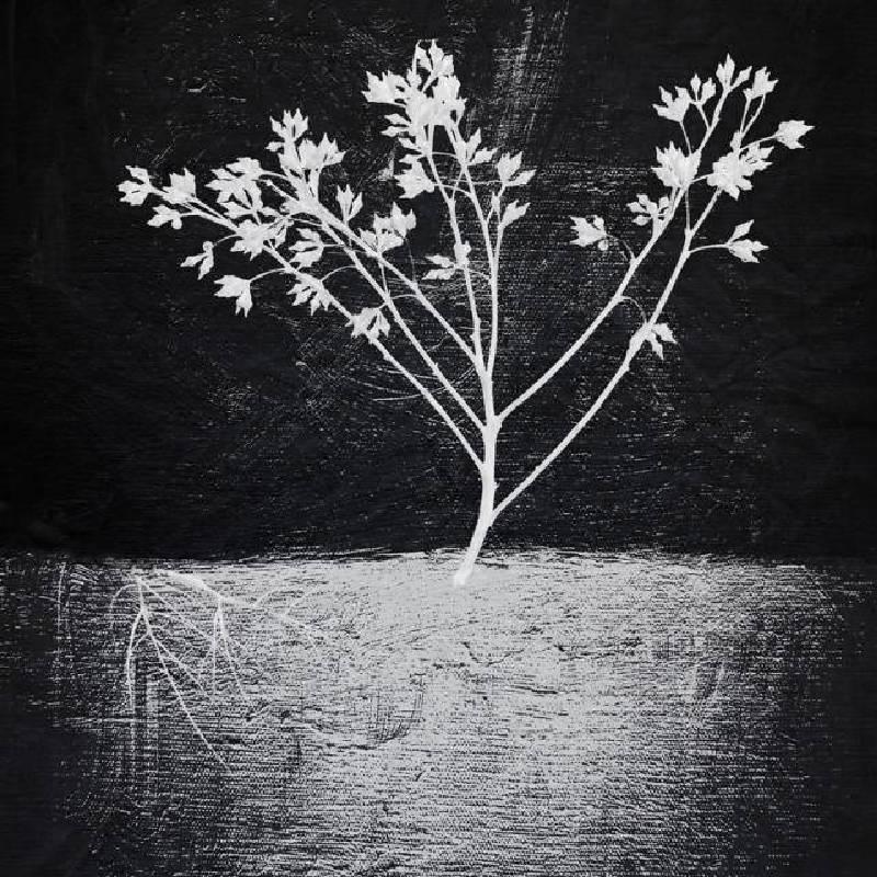 陳志駒 Magic in darkness 50_50 cm 單版 2013
