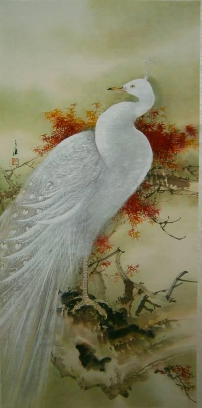 白孔雀-白狼作品