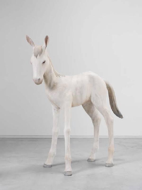 土屋仁应 Foal