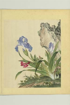 郎世寧,《仙萼長春冊之一》。圖/國立故宮博物院提供。