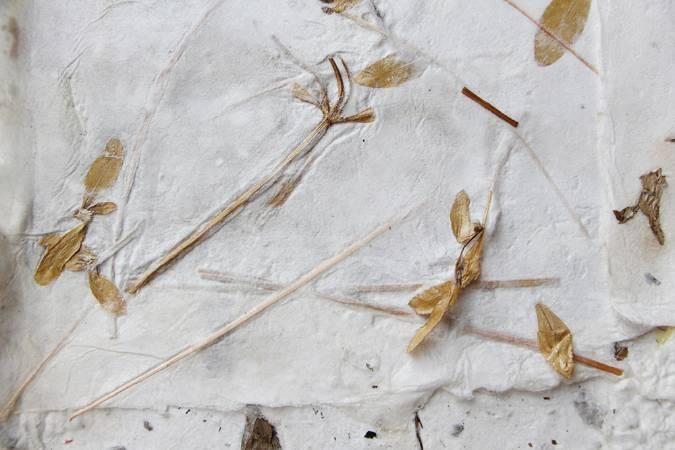 青草紙。圖/非池中藝術網攝。