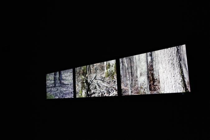 《在森林裡遇見自己》,2015。圖/非池中藝術網攝。