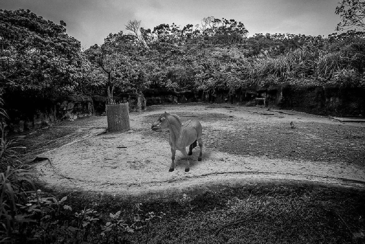 王鼎元《台北愛丁堡動物園計畫》-2s