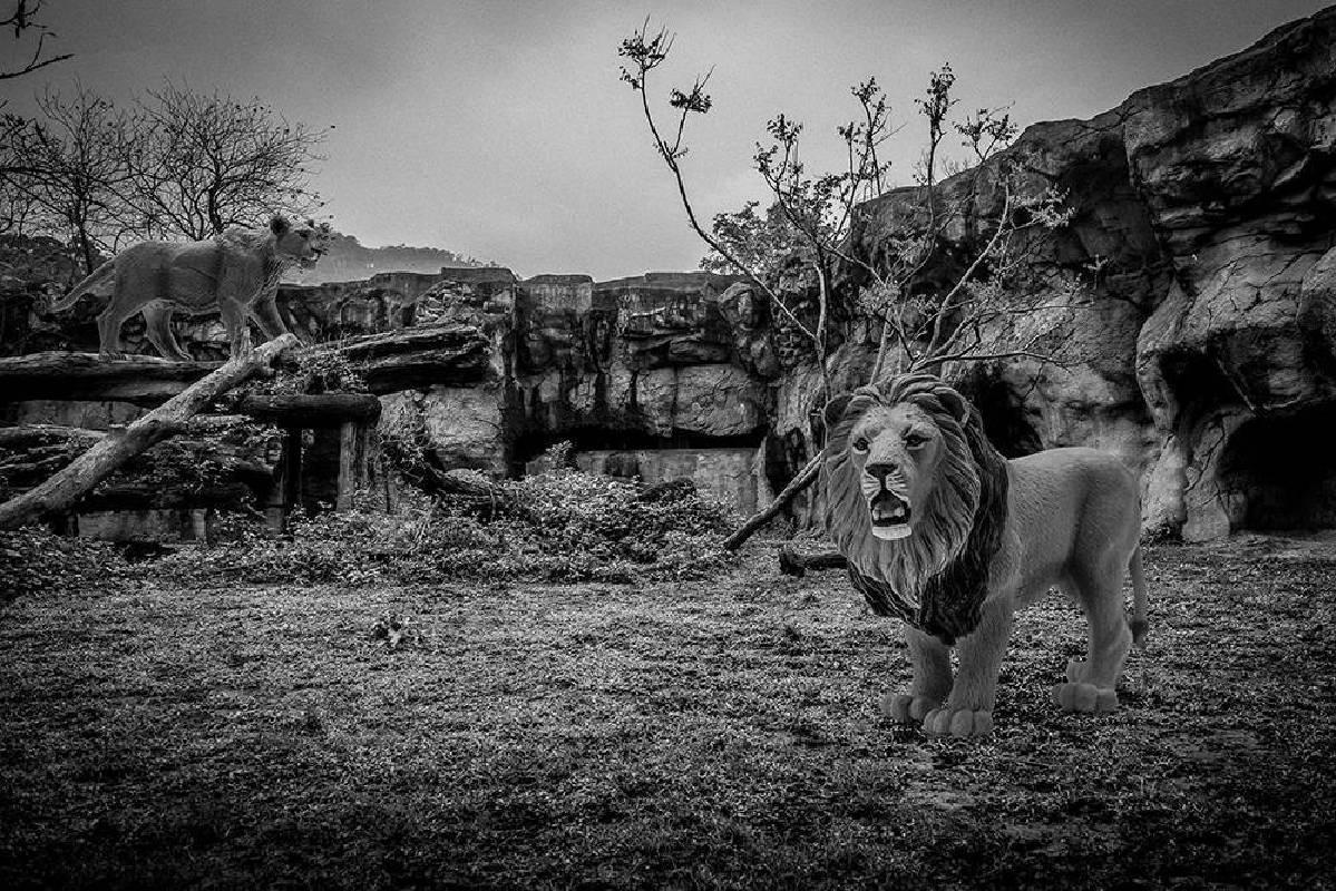 王鼎元《台北愛丁堡動物園計畫》-3s