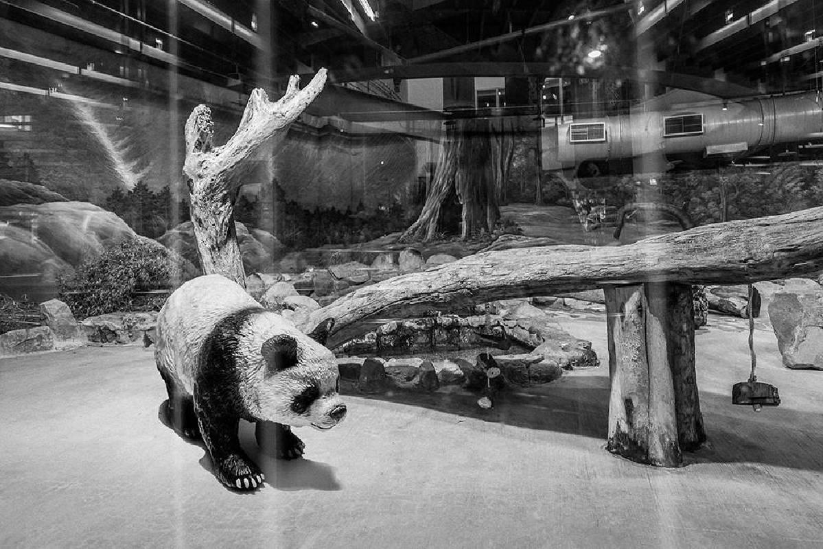 王鼎元《台北愛丁堡動物園計畫》-4s
