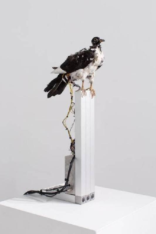 南冥有鳥,其名為鵬 /鳥類標本、鋁、3d列印物件、電子零件,12x30x60cm,2016