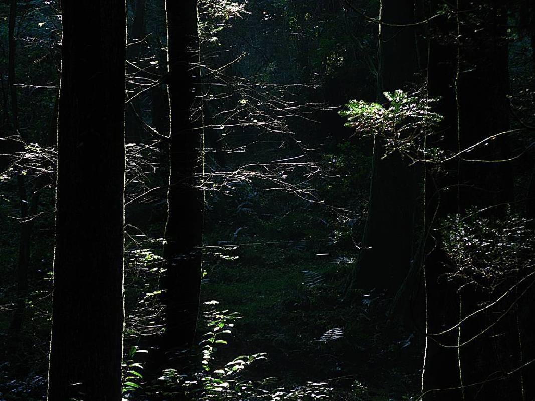 陳昭奕攝影-綠光森林