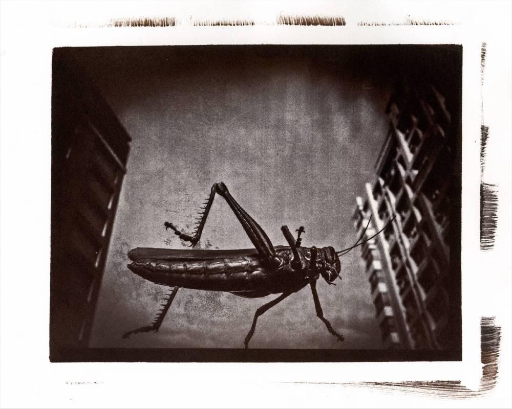 蚱蜢先生 Mr. Grasshopper, 78x61cm, 典工藝技法轉藝術微噴於USFAP德國平滑藝術紙, 2016