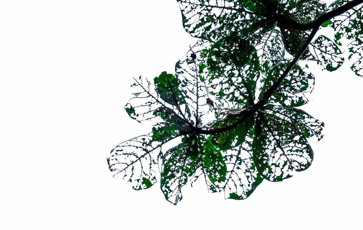 綠.澀風景Transient Beauty#4, 60x45cm, 高階藝術微噴於William Turner德國無酸館藏蝕刻藝術紙, 2014