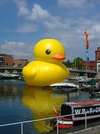 霍夫曼作品,黃色小鴨。