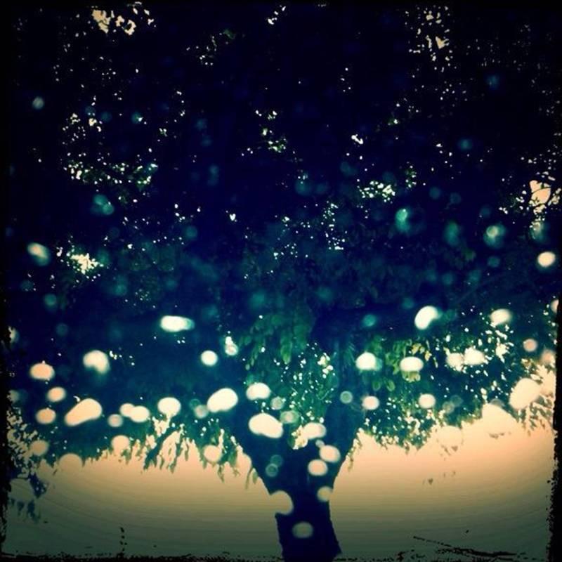 雨 樹 SECOND H. 攝影