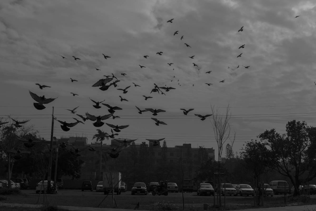 天使望鄉-停車場上正在覓食的野鴿群, 藝術微噴、無酸相紙,  90x60cm, 2018