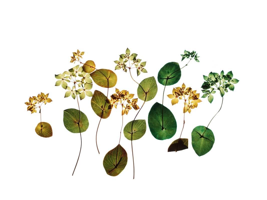 許曉薇 Hee Siow Wey   | 吟花 09 Flower Chant 09 |  攝影 Archival pigment print 、阿波紙 雲流 Awagami  |  45x30cm |  2019