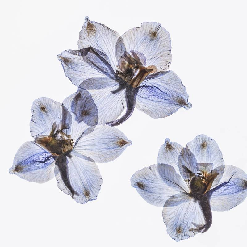許曉薇 Hee Siow Wey   | 吟花 19 Flower Chant 19 |  攝影 Archival pigment print 、阿波紙 雲流 Awagami  |  45x45cm |  2019