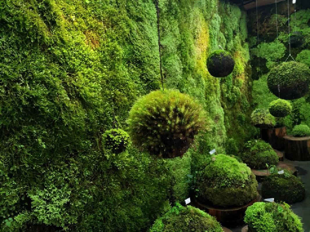 辜嚴倬雲植物保種中心之物種保育「方舟計畫」與苔蘚保種行動延伸,構築溫室移地培育植物與苔蘚,現場觀眾可以穿梭於溫室內外,並閱覽保種、採集等相關文件。圖片為2018臺中花博「植物方舟」,由財團法人辜嚴倬雲植物保種暨環境保護發展基金會提供。