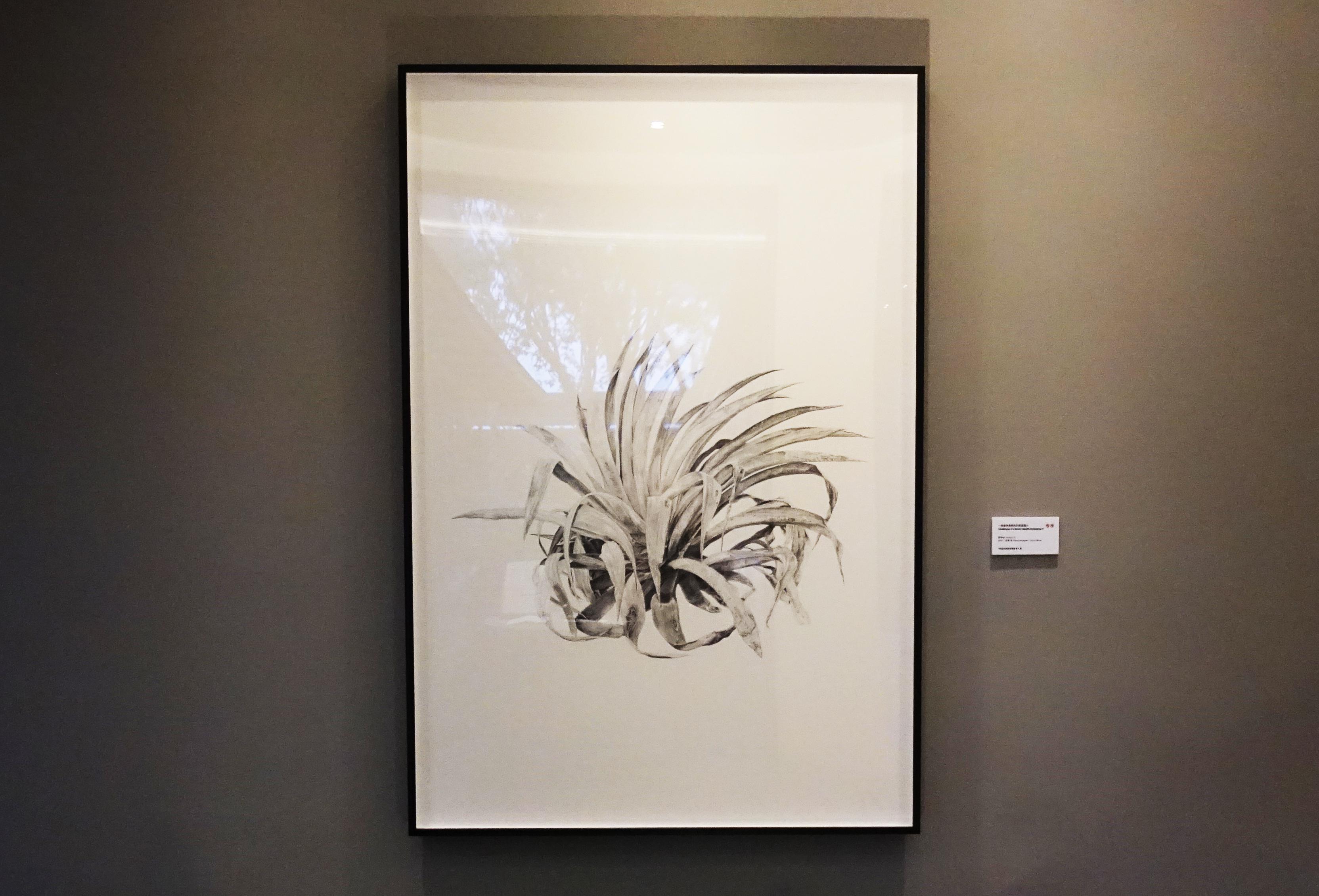 劉芸怡,《一座邊界島嶼的防禦圖鑑VI》,150 X 100 cm,鉛筆、紙,2019。