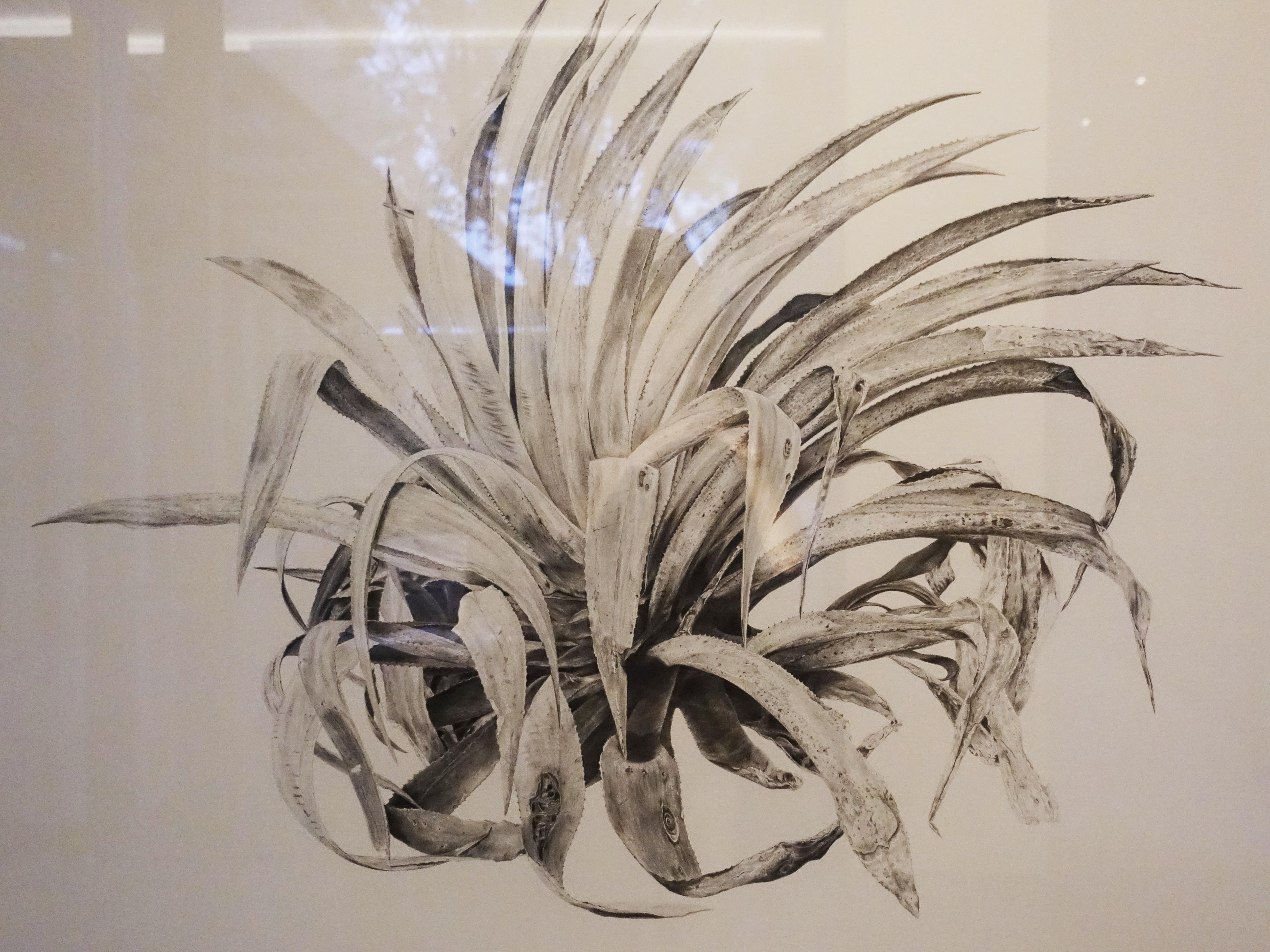 劉芸怡,《一座邊界島嶼的防禦圖鑑VI》細節,150 X 100 cm,鉛筆、紙,2019。