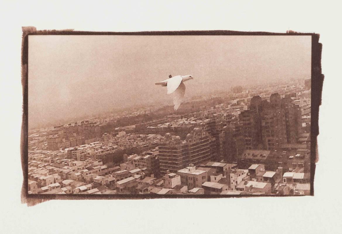軍鴿報告書(卷二)- 飛雁新村02 Military Pigeon Report (Vol. 2) - Feiyan New Village 02, 攝影、凡戴克棕版顯影、美術紙, 16x9cm, 2020