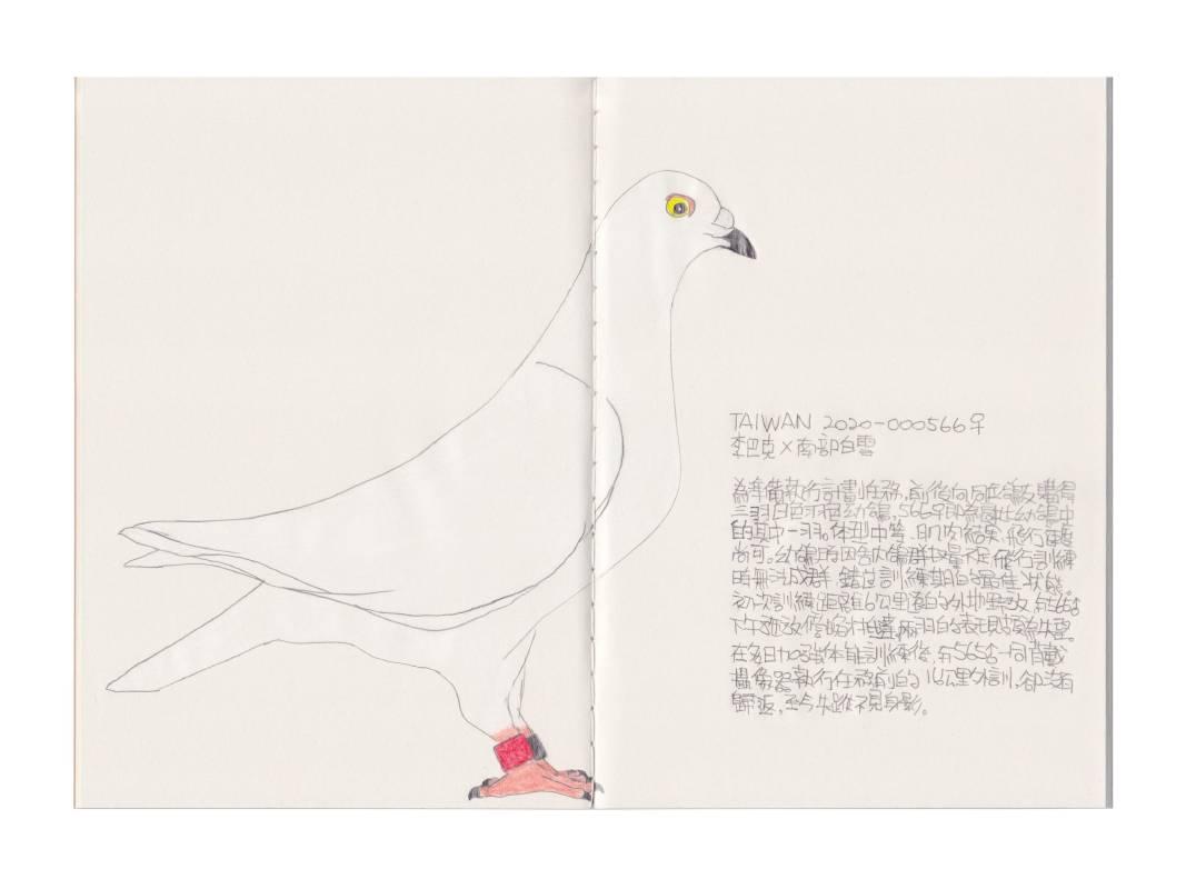 鴿子Pigeon – TAIWAN 2020000566♀, 手繪、色鉛筆、再生紙, 21x29.7cm (A5), 2020