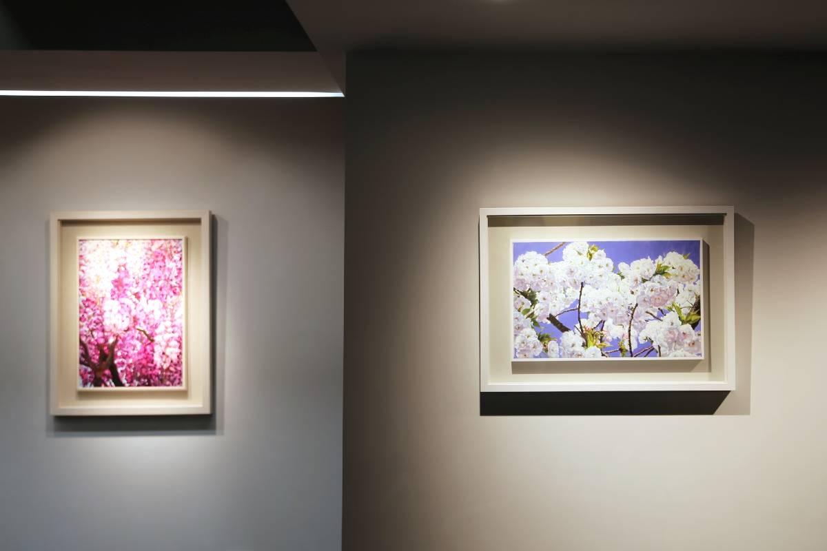 《花見‧櫻狩》林嶺森油畫個展-阿波羅畫廊