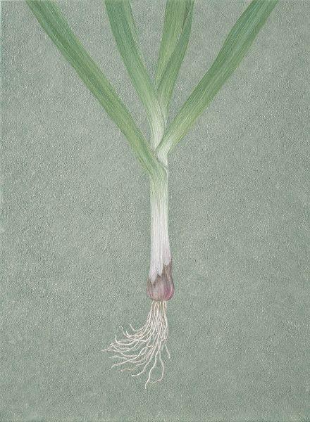 鍾舜文-日常採集-蒜仔 Daily collection - garlic