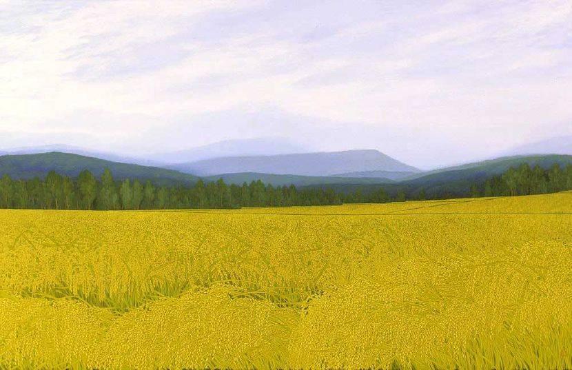 洪江波-稻田