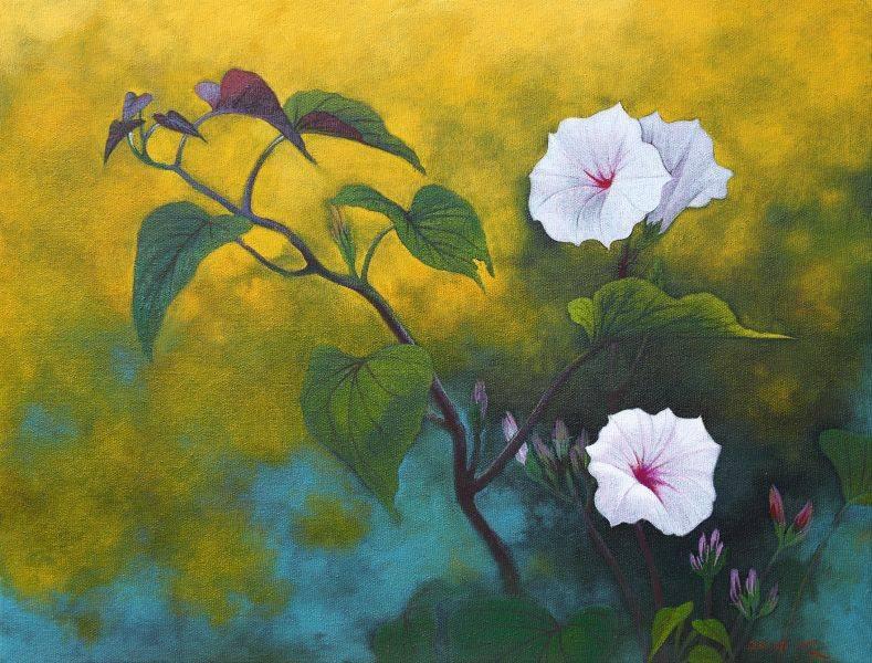 洪江波-地瓜花