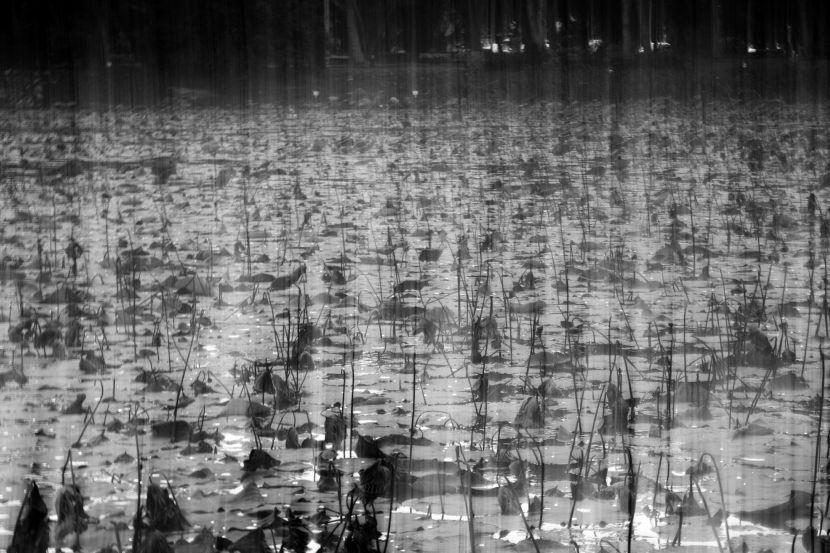 張庭甄-即景-置雨下