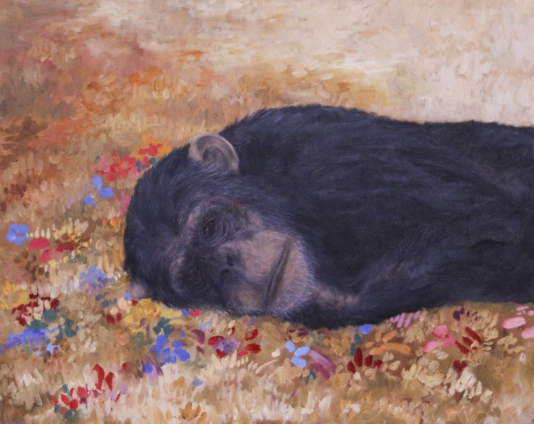 蘇柔安-猩猩與我-11