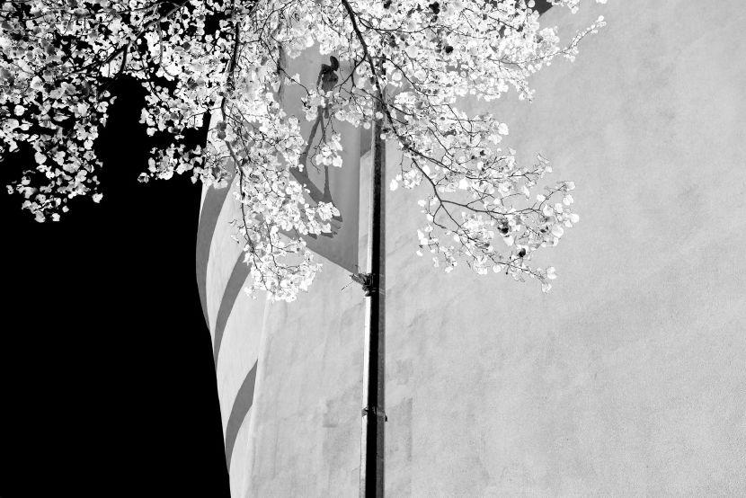 王品堯-Gwathmey Siegel BLACK