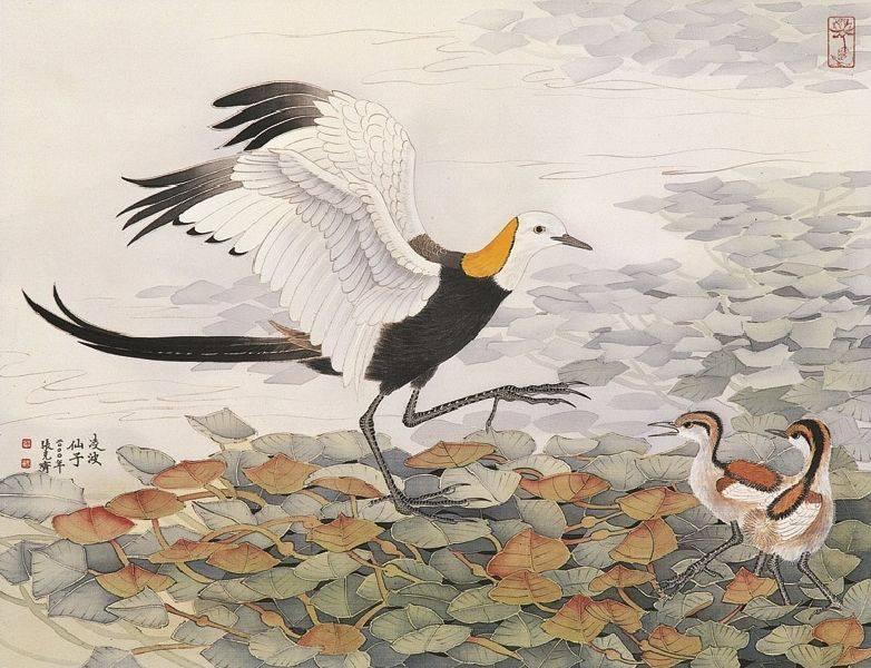 張克齊-慈暉 (水雉)
