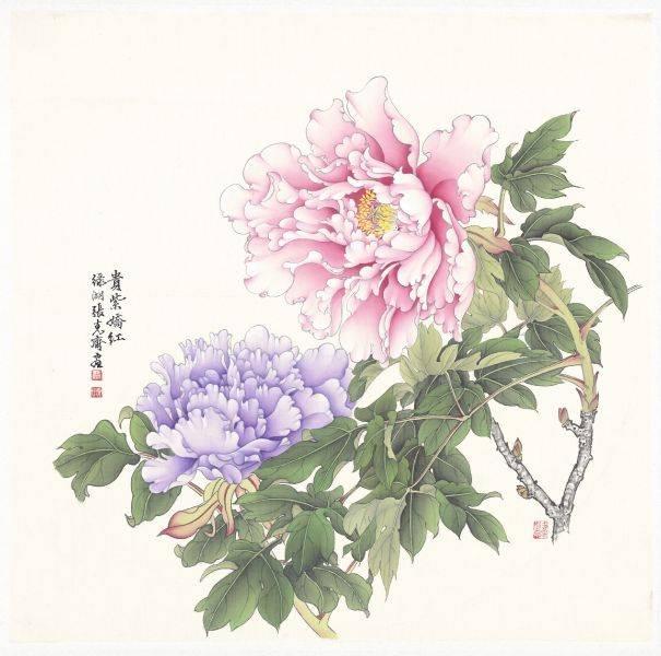 張克齊-貴紫嬌紅