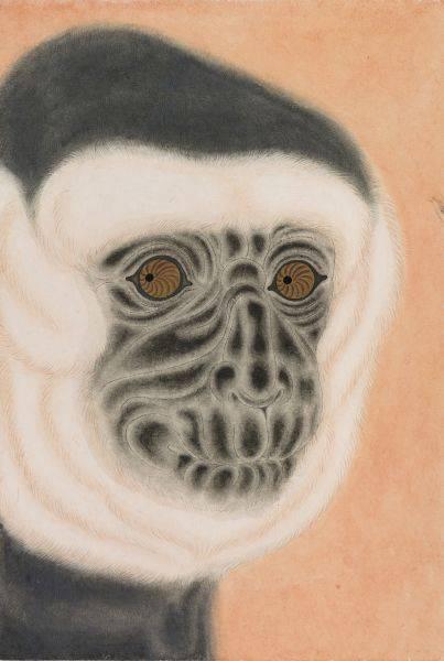 曾建穎-黑面猿