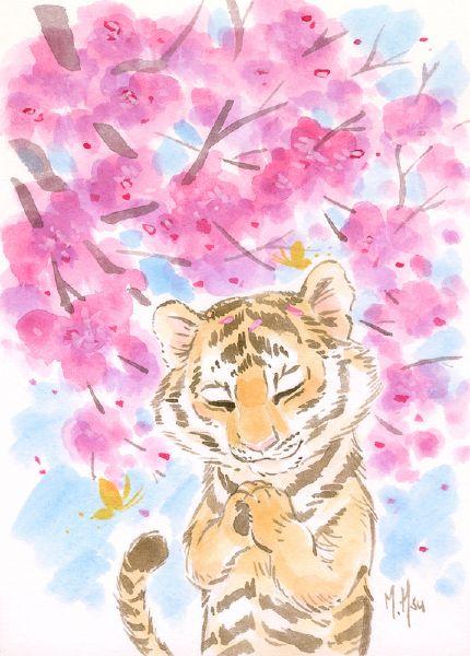 徐鈺樺 -櫻之願-虎