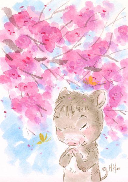 徐鈺樺 -櫻之願-豬