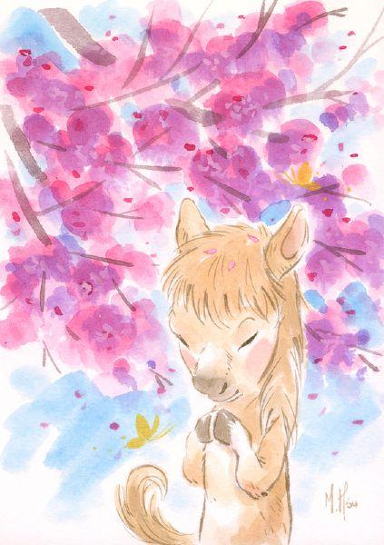 徐鈺樺 -櫻之願-馬