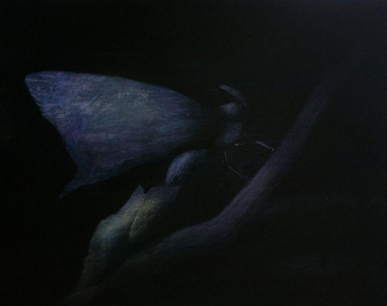 鄭思宇-用月光曬乾翅膀