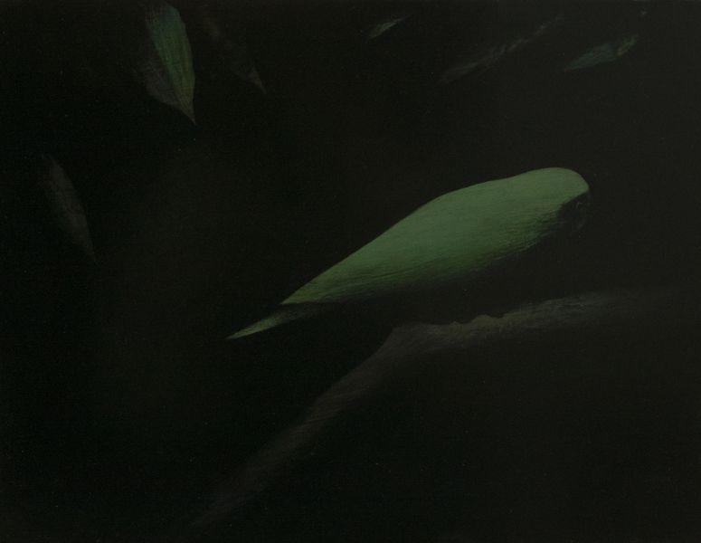 鄭思宇-瞰