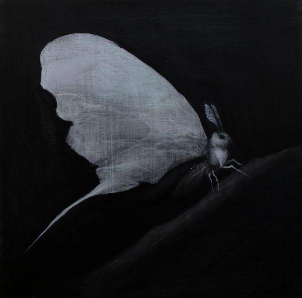 鄭思宇-兔面蝶