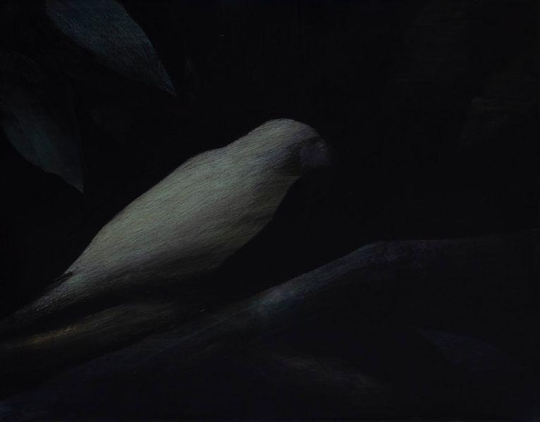 鄭思宇-夜鳥