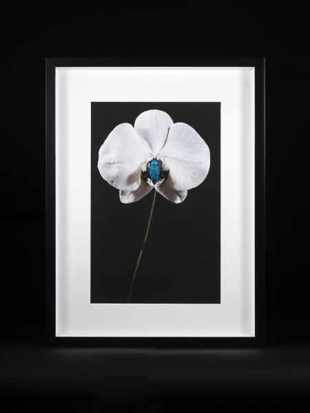 Emanuel Toffolo-ORCHID WITH BEETLE #2