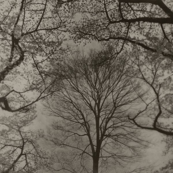志鎌猛-《稍縱即逝 - 風景:井之頭 #8》 Evanescence-Landscape: Inokashira #8