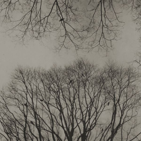 志鎌猛-《稍縱即逝 - 森林: 井之頭 f1 》Evanescence - Forest: Inokashira f1