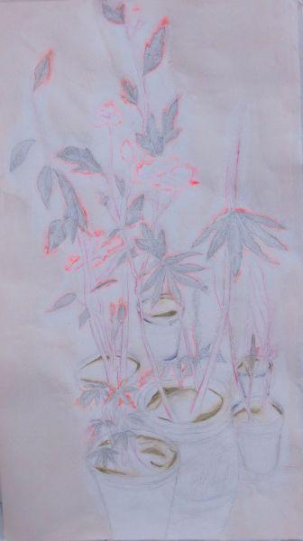 洪瑄-六個盆栽