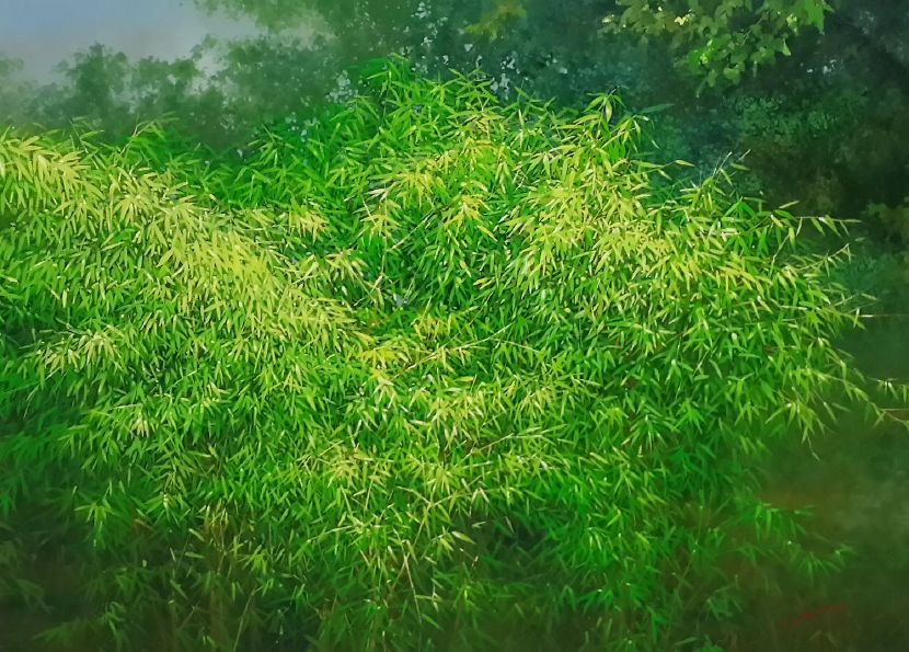 林嶺森-翠竹 Bamboo forest