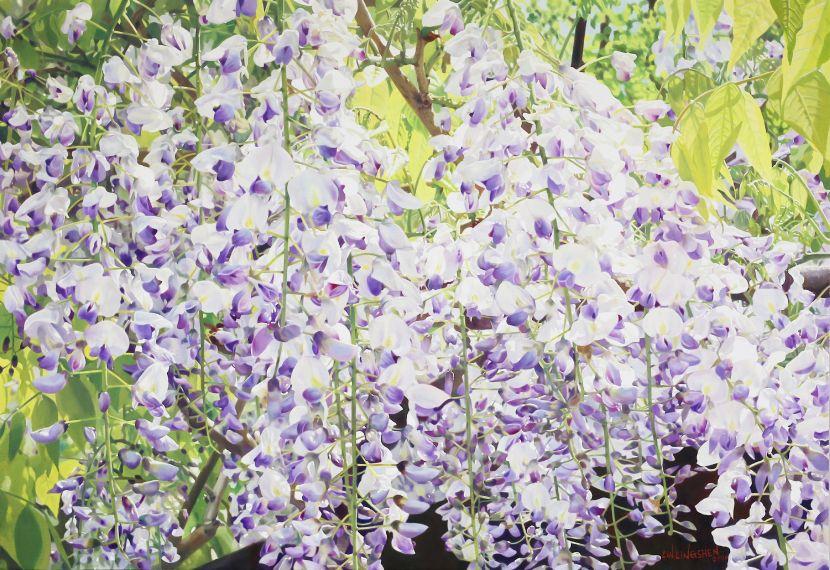 林嶺森-北海道紫藤 Wisteria floribunda in Hokkaido