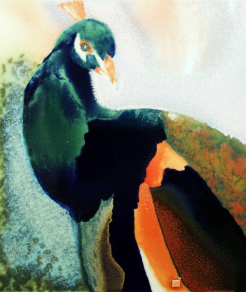 范振金-孔雀 Peacock