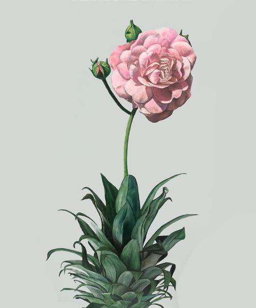 顏昱齊 -月季鳳梨 China rose pineapple