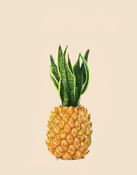 顏昱齊 -虎尾鳳梨 Hu-Wei pineapple